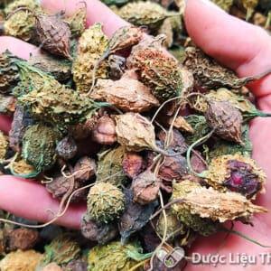 Sử dụng trà khổ qua rừng mỗi ngày giúp hạ đường huyết trong máu, rất tốt cho người bệnh bị tiểu đường