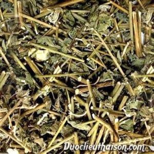 Hình ảnh sản phẩm cỏ