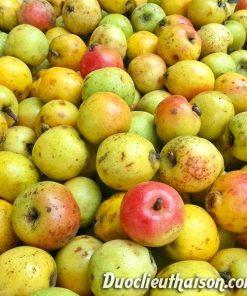 Trái táo mèo yên bái