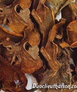 Nấm ngọc cẩu khô Thái sơn