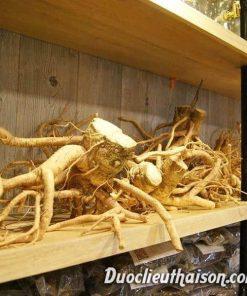 rễ đinh lăng tốt cho sức khỏe