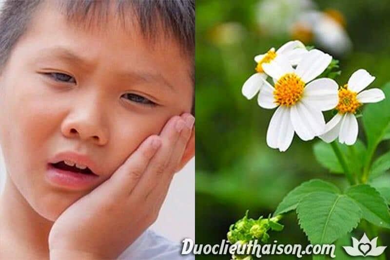 Tác dụng hoa xuyến chi chữa đau răng