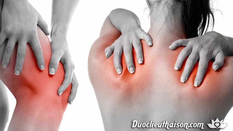 Thảo dược chữa thấp khớp hiệu quả