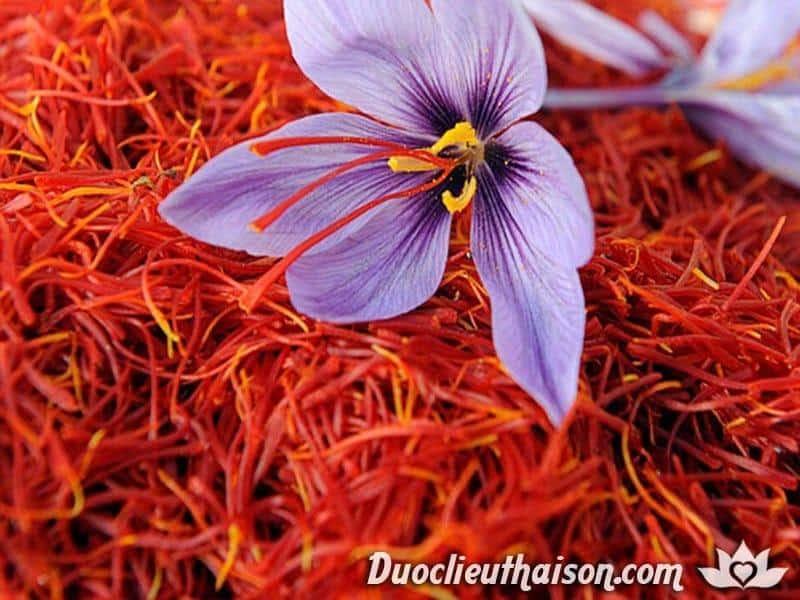 Nhụy hoa nghệ tây (saffron) là gì?