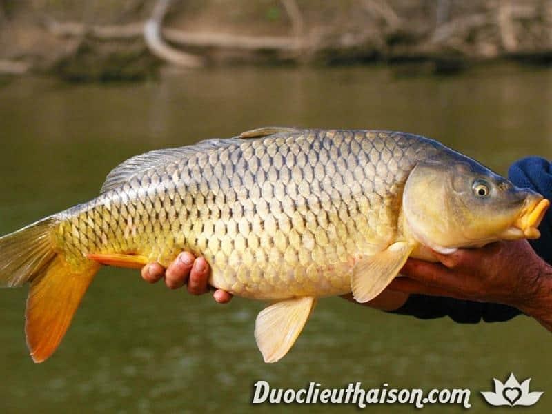Hình ảnh cá chép