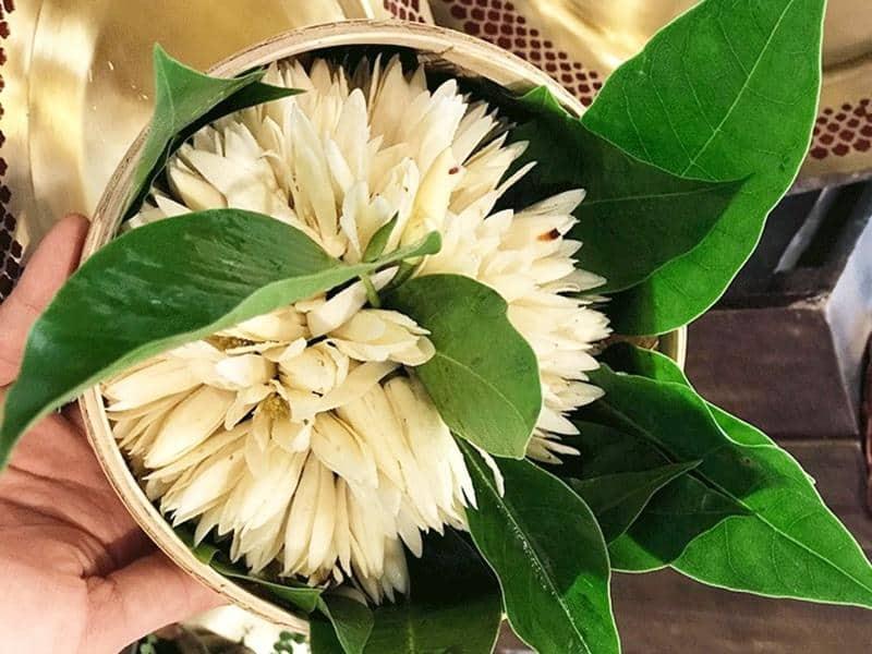 Hoa ngọc lan mang đến hương thơm