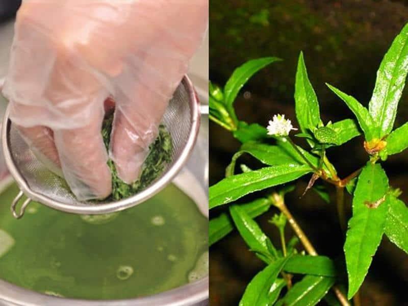Cỏ mực là một vị thuốc dân gian được sử dụng nhiều trong nhân dân