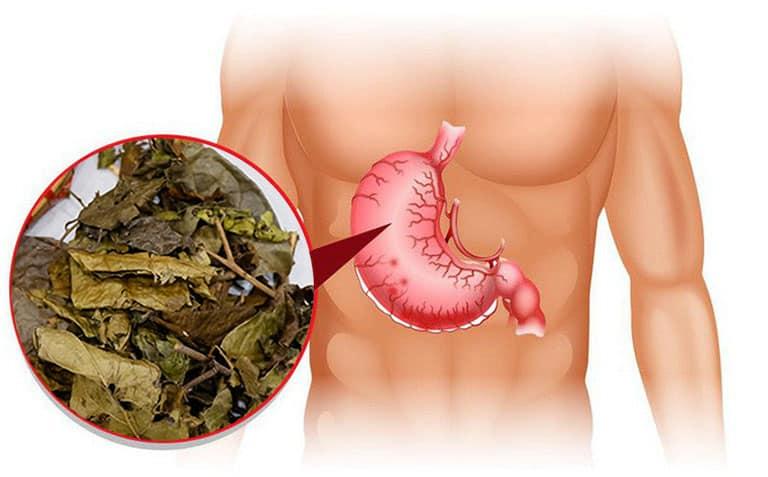 Thành phần dược chất trong cây Xạ Đen có công dụng rất tốt đối với bệnh về dạ dày