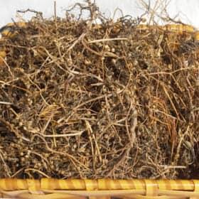 Bạch Hoa Xà Thiệt Thảo là cây thuốc dân gian đang được sử nhiều trong y học.
