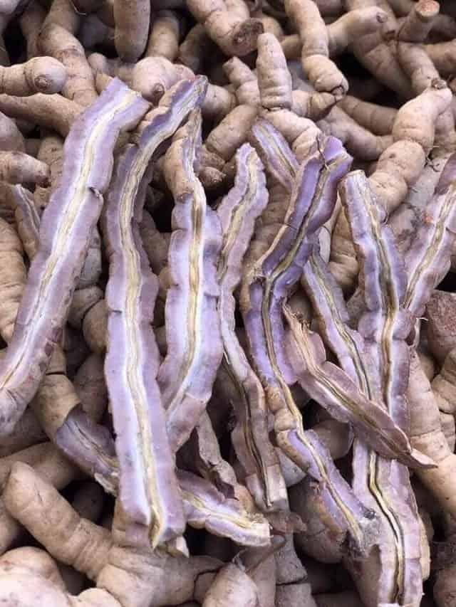 Rễ Ba Kích tím có thành phần dược chất cao hơn Ba Kích trắng