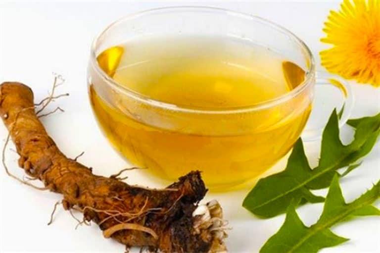 Thành phần trong cây Bồ Công Anh có thể điều trị viêm đường tiết niệu