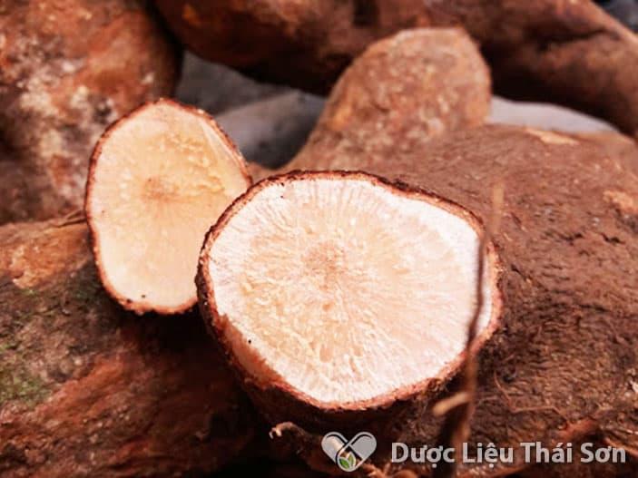 Tầm gửi nghiến xốp mềm và có phần thịt bên trong màu ngà hoặc hồng nhạt