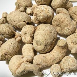 Trong Đông Y, Củ Tam Thất Nam là dược liệu quý có nhiều công dụng cho sức khỏe
