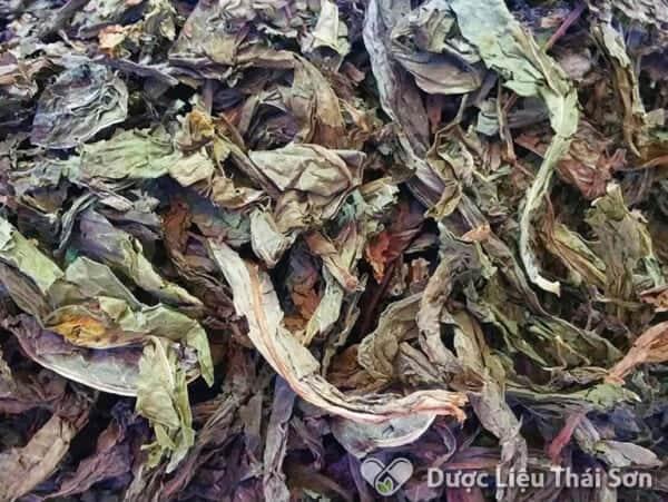 Hình ảnh dược liệu lá khôi do Thái Sơn cung cấp được khách hàng tin tưởng và sử dụng