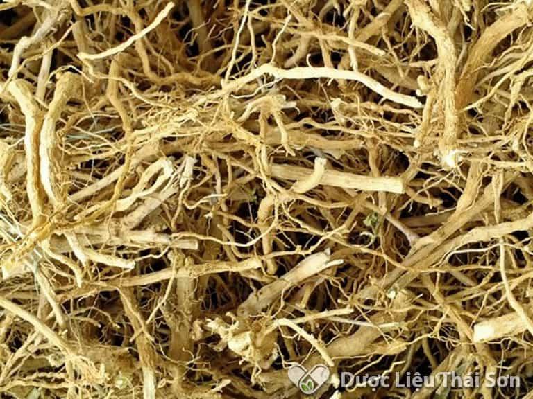 Rễ cây là bộ phận có chứa lượng dược chất cao