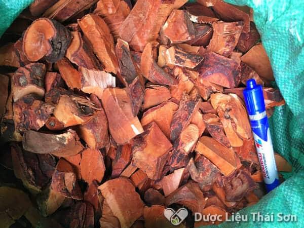 Rễ cây Mú Tửn ngâm rượu có nhiều công dụng tốt cho sức khỏe, đặc biệt là tăng cường chức năng sinh lý