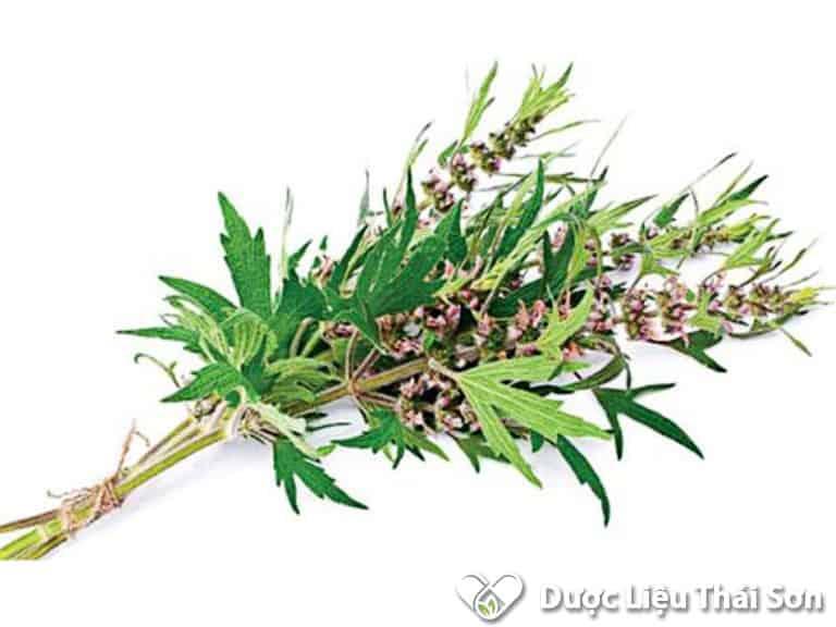 Thành phần dược chất trong cây ích mẫu đã được các nhà khoa học nghiên cứu và khẳng định