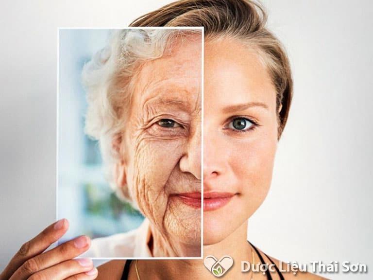 Khả năng chống lão hóa của nấm Phục Linh rất cao