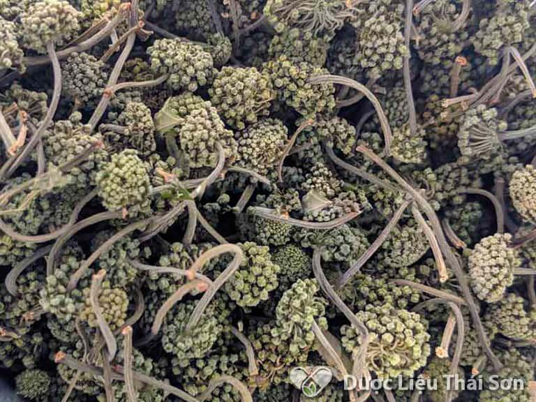 Những nụ hoa Tam Thất bị mốc nên được loại bỏ vì có chứa chất gây hại cho sức khỏe