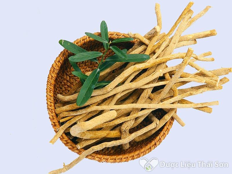 Hình ảnh rễ cây xáo tam phân